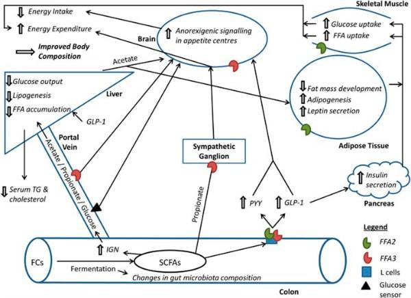 Mécanismes_Byrne CS et al_600