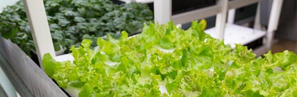cultiver-ses-légumes-bio-est-possible_600